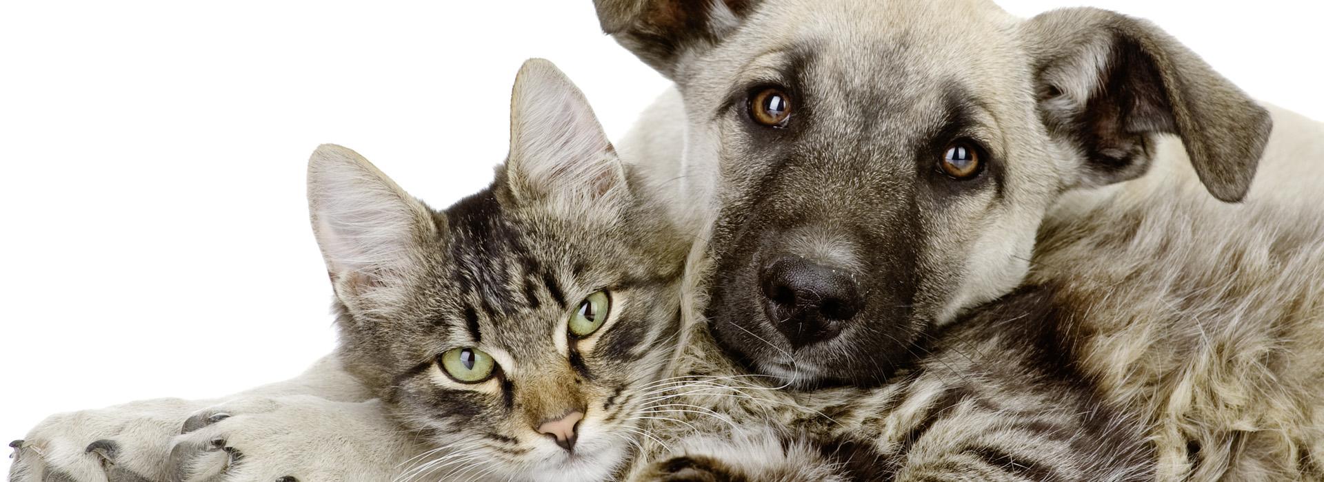 Liebe Tierfreunde,