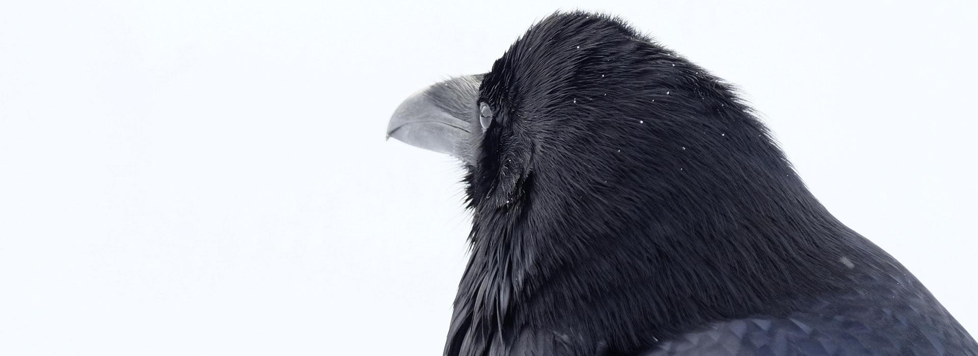 Tierische Informationen