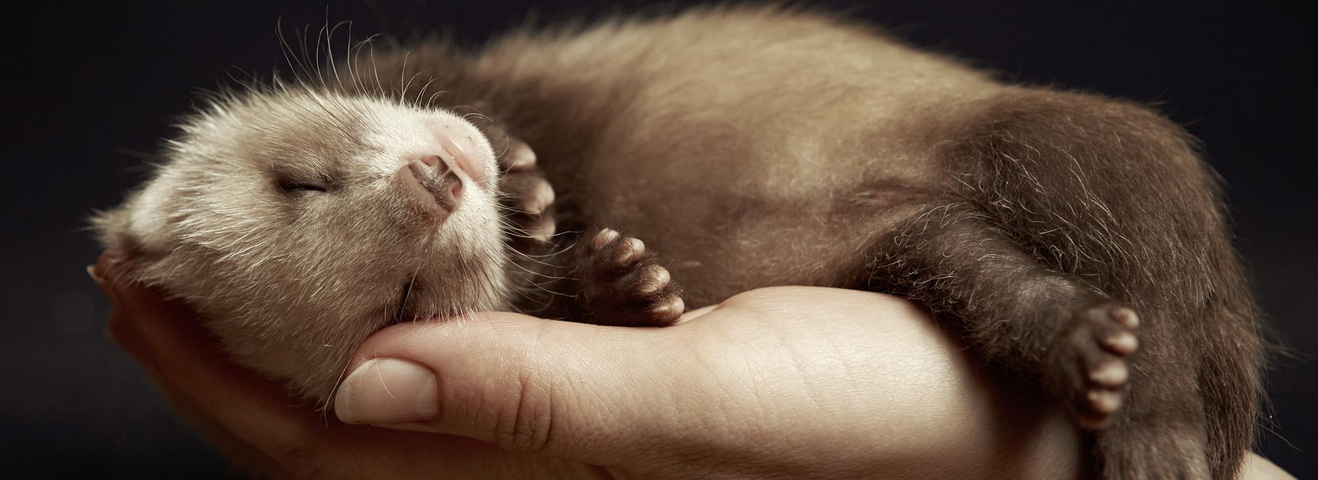 Vermittelte Kleintiere