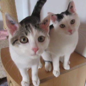 Sally und Sissi