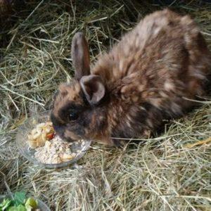 Vermittlungshilfe für Kaninchendame Stupsi