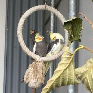 Verschiedene Ziervögel
